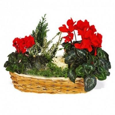 Bouquets pour les obsèques reverenti