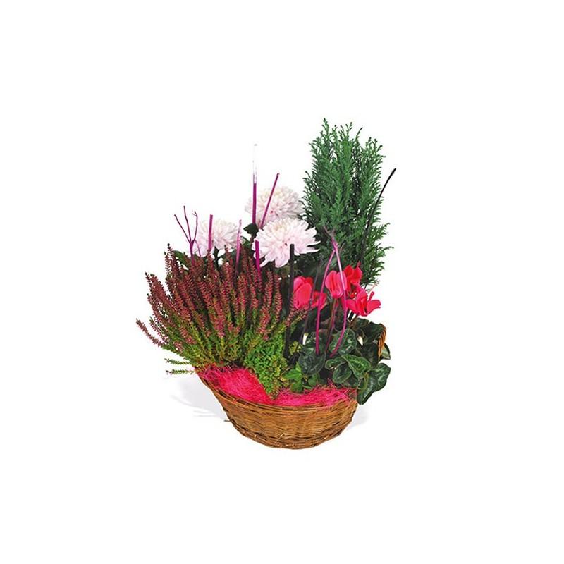 Composition de plantes rouges pour sépulture