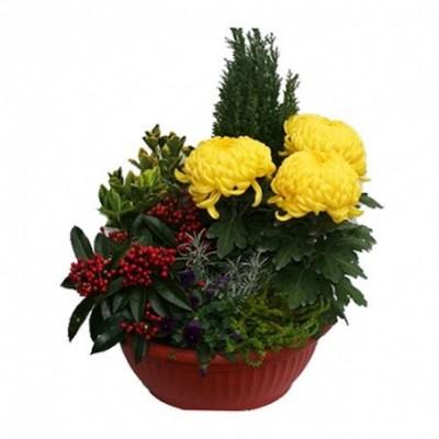 Livraison au cimetière de cet ensemble de plantes et fleurs fraîches Balnéas.